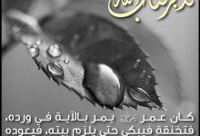 تدبر القرآن