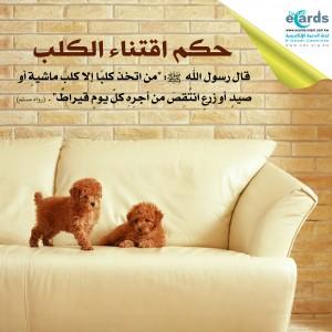 حكم اقتناء الكلب