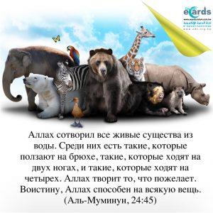 Виды животных