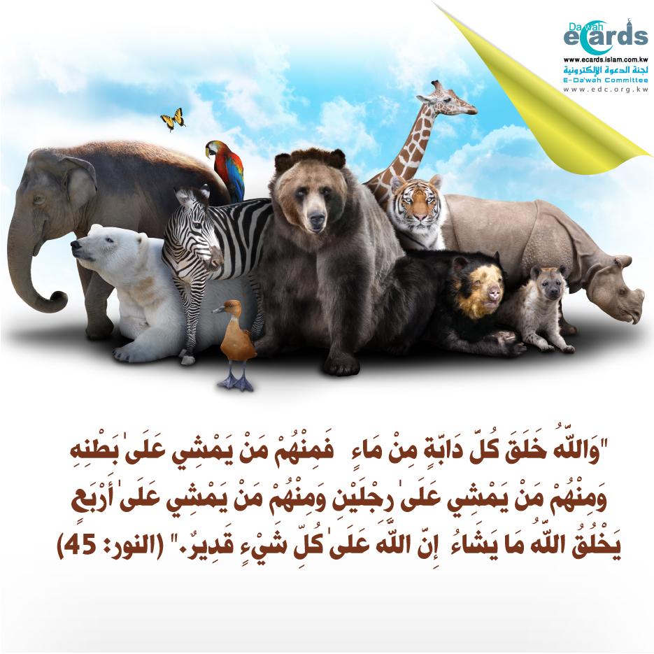 صورة لبعض الحيوانات