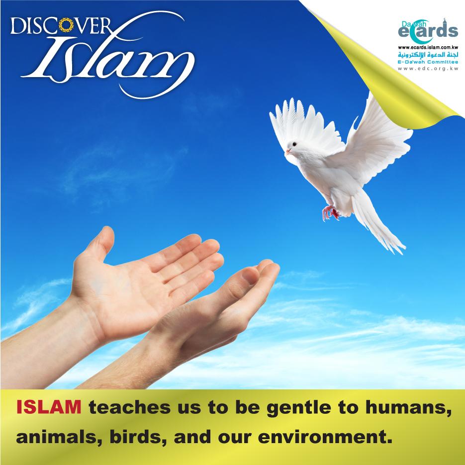 Discover Islam6
